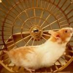 Hamster Wheel – Daily Grind