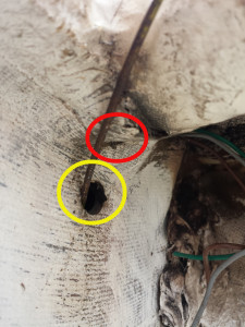 From inside anchor locker. Drain hole circled in red. Mysterious extra hole circled in yellow.